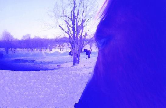 purple horse