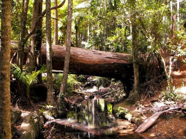 log-creek