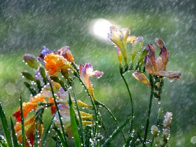 Raining-on-Flowers